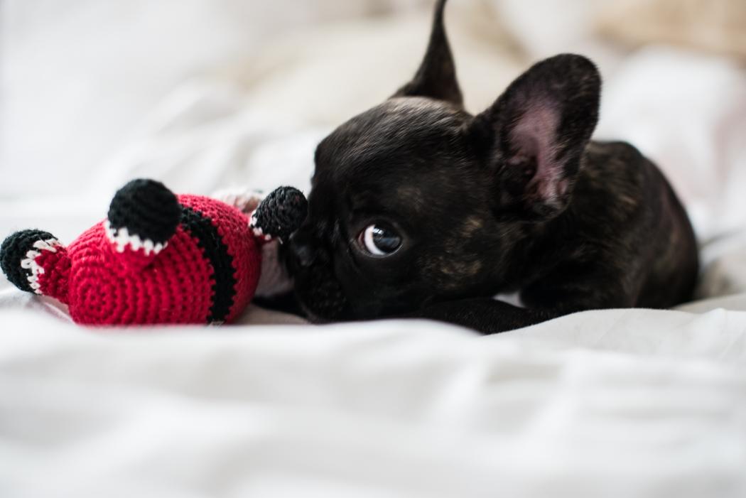 ourvicky-Lindarella-Französische-Bulldogge-Bloggerdog-4