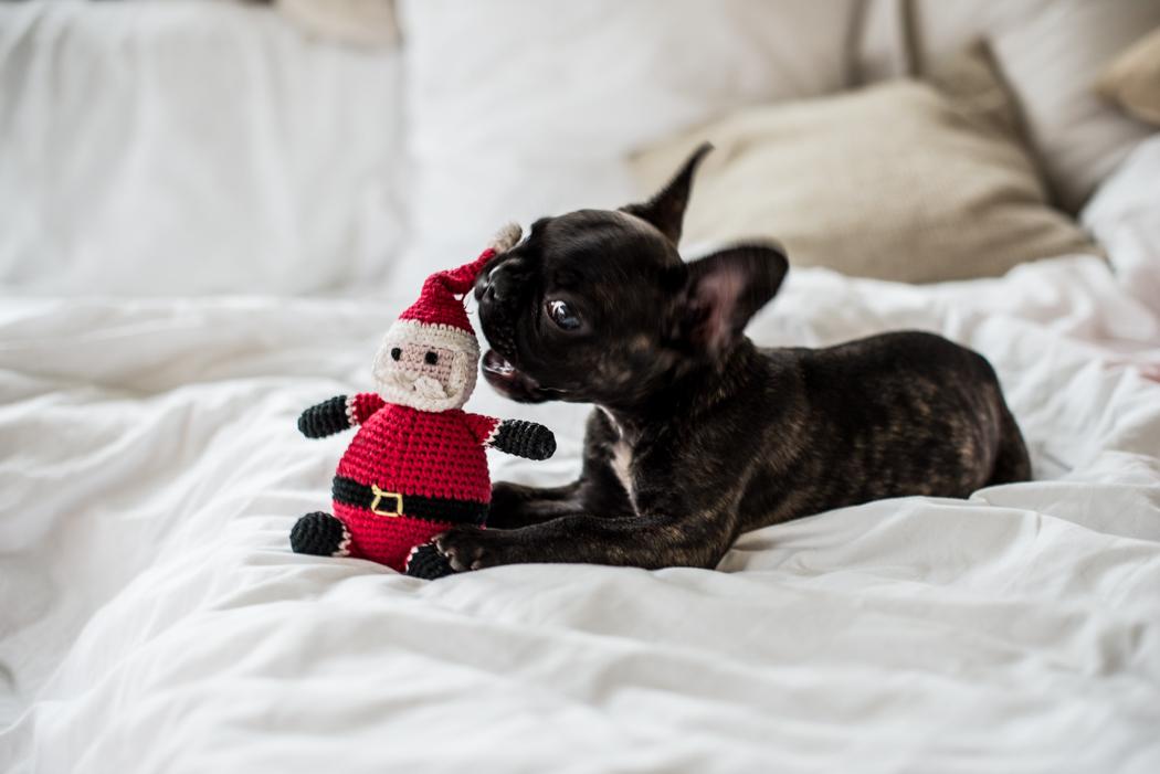ourvicky-Lindarella-Französische-Bulldogge-Bloggerdog-8